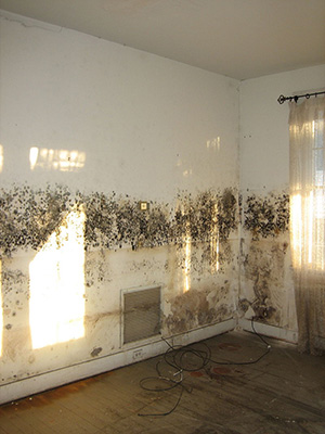 a mold infested wall