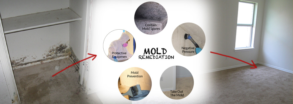 mold remediation process in paris texas by lms restoration. Black Bedroom Furniture Sets. Home Design Ideas